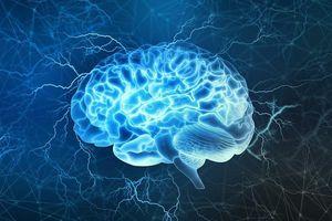 Phát minh bộ não 3D giống hệt não người đầu tiên trên thế giới