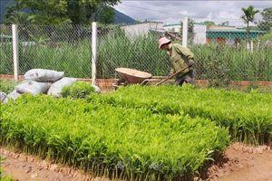 Đồng bào dân tộc Đắk Lắk 'thay da đổi thịt' nhờ trồng rừng