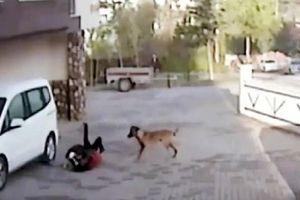 Clip: Kinh hoàng cảnh bé gái bị chó pitbull tấn công trên đường