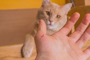 Cách xử lý vết thương chính xác nhất khi bị mèo cào