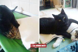 Được trung tâm thú y cứu sống, chú mèo trở thành 'y tá' giúp chăm sóc chó mèo bị bệnh