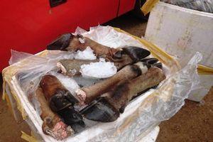 Nghệ An: Bắt giữ hơn 5 tạ sản phẩm động vật không rõ nguồn gốc