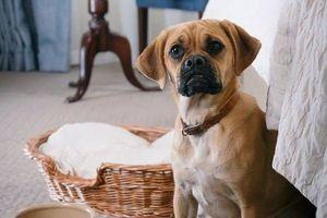 Lạc bước vào thị trấn thân thiện với chó nhất ở Anh qua bộ ảnh thú vị