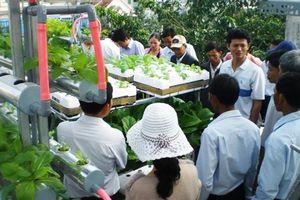 Quảng Ngãi: Thu hút đầu tư vào nông sản sạch, hữu cơ