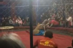 Đang biểu diễn, sư tử bất ngờ lao tới tấn công bé gái 4 tuổi