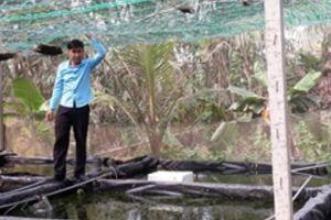 Kỹ sư bỏ việc về nuôi cá cảnh, tép cảnh, lãi 15-20 triệu đồng/tháng