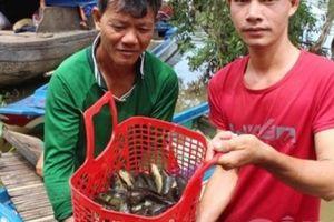Những xóm du cư mùa nước nổi: Cân 62kg cá rô được 1,5 triệu đồng