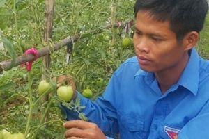 Ninh Bình: Kỹ sư 8X bỏ về quê trồng rau an toàn chỉ lo 'cháy hàng'