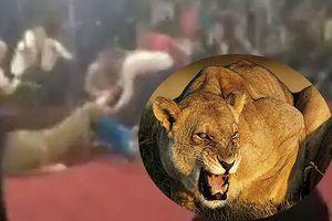 Đang biểu diễn xiếc, sư tử tấn công bé gái 4 tuổi