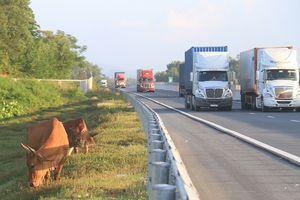 VEC kỷ luật cán bộ liên quan đến vụ đường cao tốc 34.000 tỷ