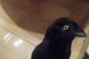 Bức ảnh sinh vật đen gây tranh cãi 'nảy lửa', Google cũng dính quả lừa!