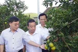 Phó Bí thư Tỉnh ủy Nguyễn Văn Thông thăm, làm việc tại huyện Yên Thành