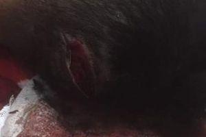 Nam Định: Camera ghi lại cảnh côn đồ mang dao phóng lợn vào tận nhà dân truy sát dã man