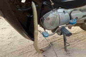 Clip: Móc con rắn dài gần 1 mét ra khỏi gầm xe máy Honda