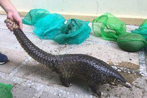 Quảng Nam: Phá đường dây mua bán động vật hoang dã quý hiếm liên tỉnh