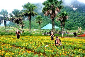 Hơn 40 loài hoa đang nở rực rỡ tại Bình nguyên xanh Khai Trung