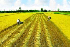 Hơn 70% đất sản xuất nông nghiệp ở Việt Nam có diện tích nhỏ hơn 0,5ha