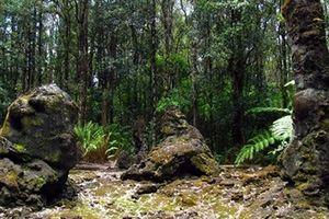 Núi lửa phun trào, rừng cây nham thạch xuất hiện