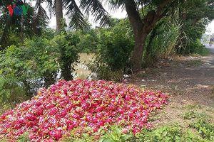 Nông sản Việt: Vì sao nơi bội thu, nơi phải... giải cứu?