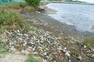 Quảng Nam: Cá, tôm ở ao nuôi chết hàng loạt chưa rõ nguyên nhân