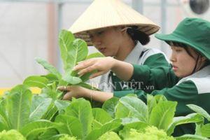 Minh bạch thông tin kết nối cung - cầu nông sản