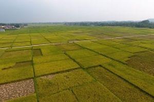 Thái Nguyên xây dựng đại lộ Đông - Tây