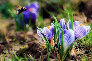 Nhìn giống hoa bèo tây nhưng nhụy của loài hoa này lên đến hàng trăm triệu