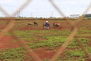 Thu hồi đất khi doanh nghiệp chậm triển khai dự án trên địa bàn tỉnh Đắk Lắk