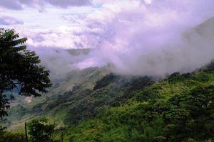 Quảng Nam: Nâng cao chất lượng quản lý bảo vệ rừng