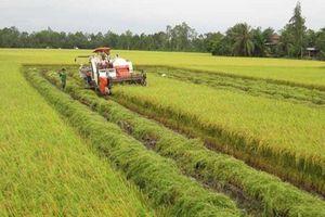 Chuyển nhượng đất nông nghiệp: Chủ yếu vẫn là giao dịch 'ngầm'