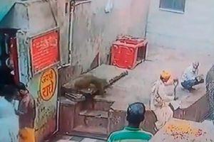 Bị khỉ cướp hổ mang chúa ngay trên tay, người đàn ông trèo tường truy đuổi