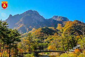 Choáng ngợp trước vẻ đẹp của mùa thu Hàn Quốc
