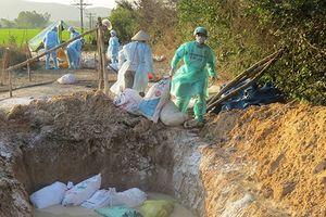 Phú Yên: Tiêu hủy 2.000 con gà bị cúm H5N6