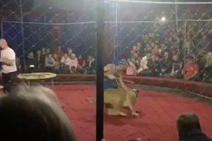 Kinh hoàng bé gái 4 tuổi bị sư tử tấn công khi xem xiếc
