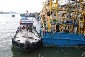 'Cung phụng' chủ tàu cá