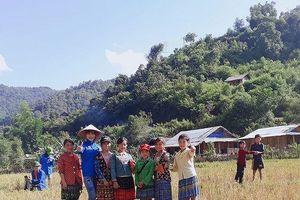 Giáo viên Nậm Ngà về với bản làng gặt lúa giúp bà con