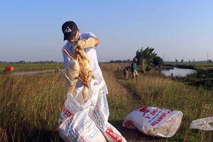 Tiêu hủy 1.500 con vịt bị dịch cúm AH5N6