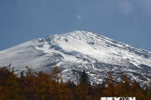 Du khách chìm đắm trong mùa lá vàng trên núi Phú Sĩ