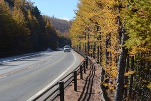 'Mãn nhãn' với núi Phú Sĩ mùa lá vàng