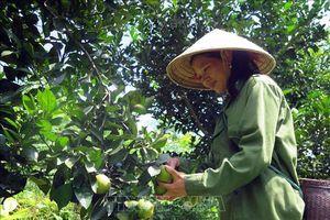 Mộc Châu phân diện hộ nghèo thành 6 nhóm để giảm nghèo
