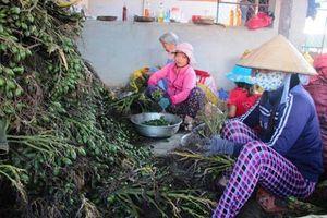 Quảng Nam: Cơ sở sấy cau hoạt động gây ô nhiễm môi trường