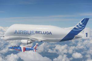 Beluga - Cá voi bầu trời của Airbus