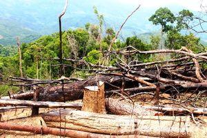 Phá rừng phòng hộ quy mô lớn ở Quảng Nam, hai vợ chồng lĩnh án