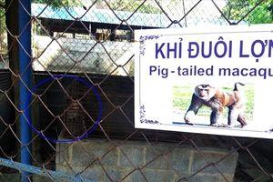 Cận cảnh thú nuôi bị coi là 'ngược đãi' tại vườn thú Công viên nước Củ Chi
