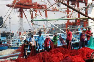 Dẹp đầu nậu, cò xe 'hành' ngư dân ở cảng cá Quy Nhơn