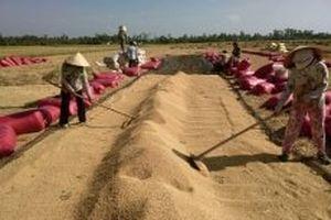 Sản xuất và xuất khẩu gạo trong thời kỳ mới