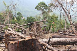 Vợ chồng thuê người phá 17 ha rừng phòng hộ lĩnh án