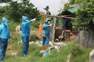Xuất hiện ổ cúm A/H5N6 độc lực rất mạnh ở Phú Yên