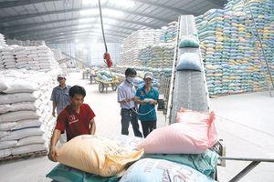 Gạo Việt đối diện nhiều thách thức trong tình hình mới