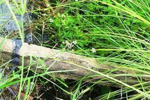 Lạ lùng: Kênh thủy lợi sử dụng bê tông cốt... cây